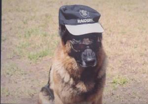 german_shepherd_cop